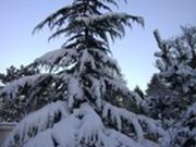 winter 7