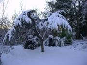 winter tuin 78